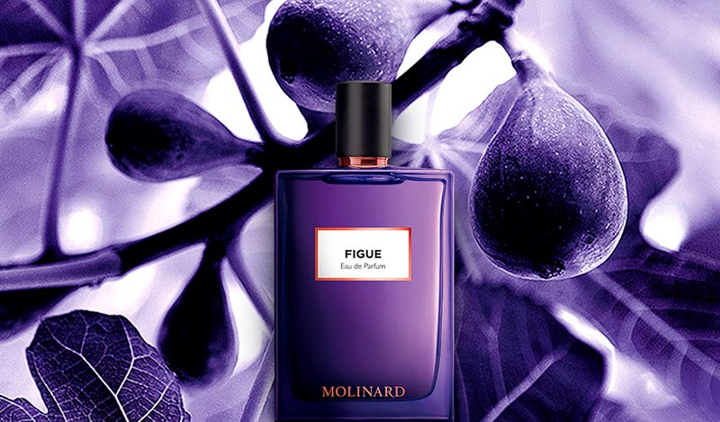 Figue Eau de Parfum Molinard
